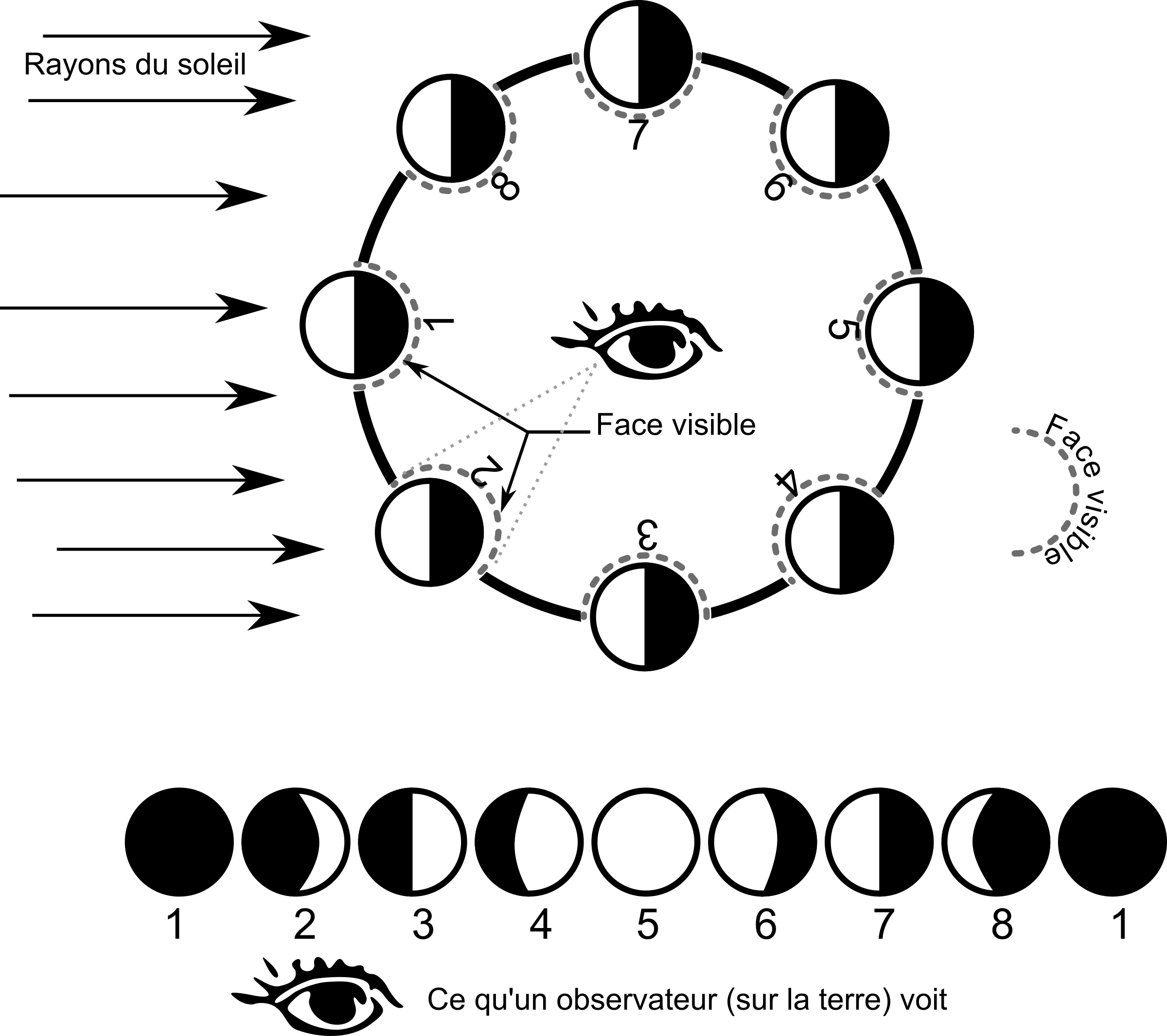 Cycle clipart sequence card. Free moon phases cliparts