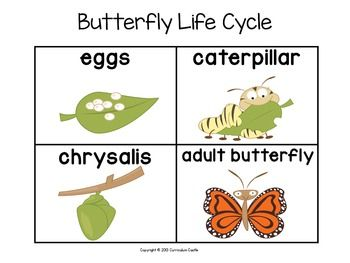 Life sequencing cards butterfly. Cycle clipart sequence card