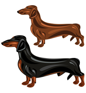Two dogs in show. Dachshund clipart