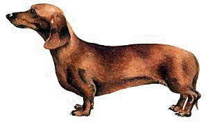 Free graphics images and. Dachshund clipart