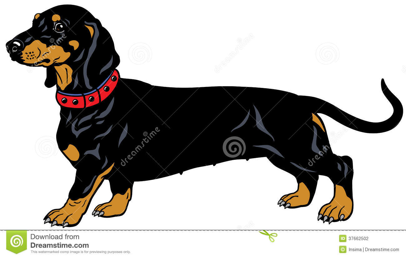 Weiner dog at getdrawings. Dachshund clipart