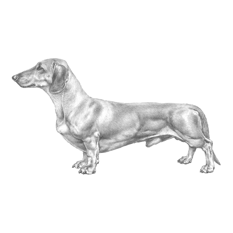 Agria animal insurance contributing. Dachshund clipart dachshund outline