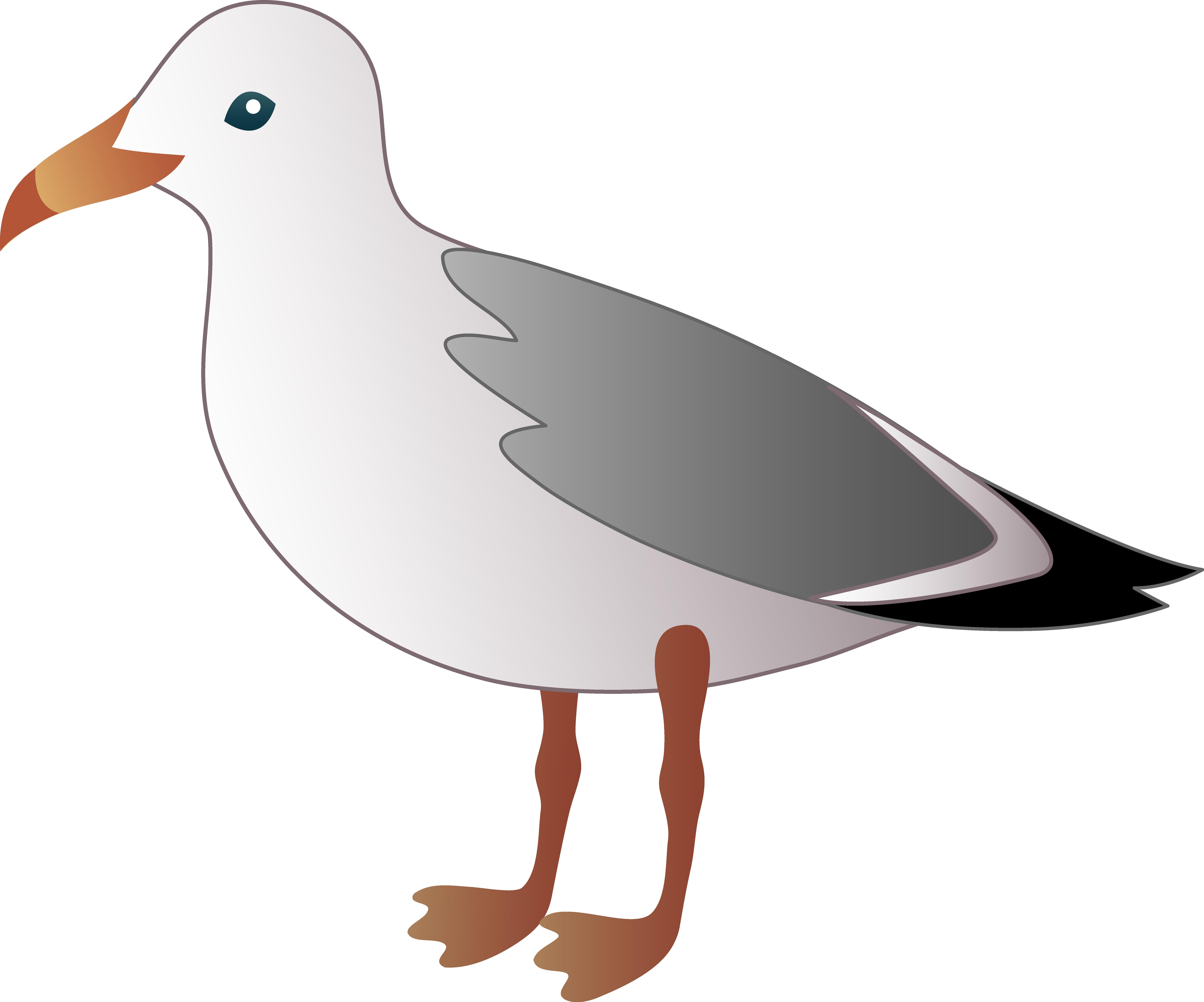 Pelican clipart seagull.  e b c
