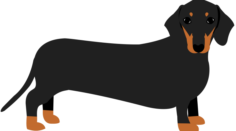 Image result for dachshund clipart