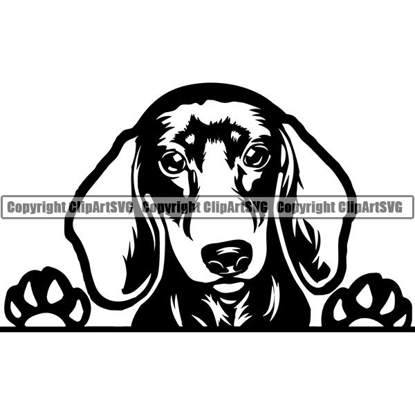 Peeking dog breed . Dachshund clipart svg