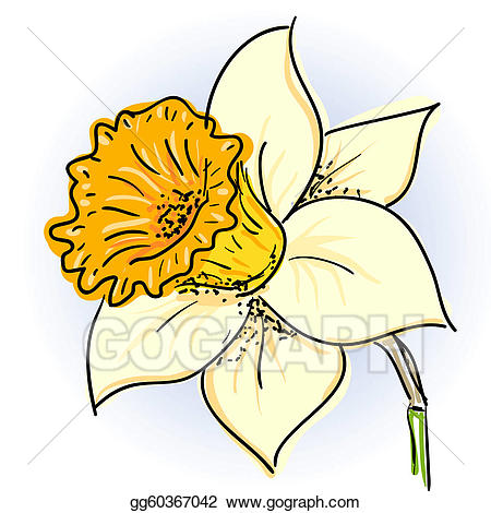 Daffodil clipart. Clip art royalty free