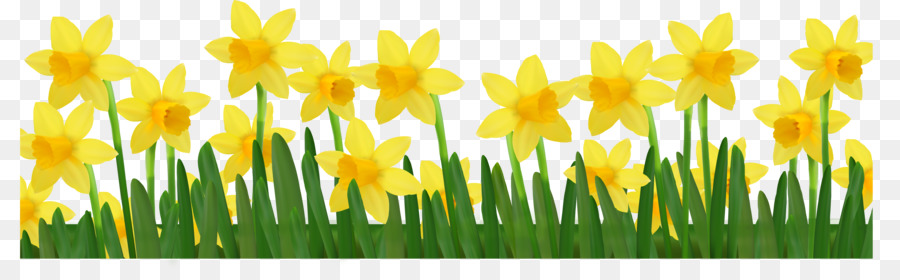 Daffodil clipart. Clip art daffodils pictures