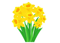 Daffodil clipart. Search results for clip