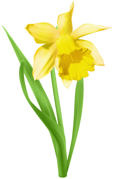 Transparent png clip art. Daffodil clipart
