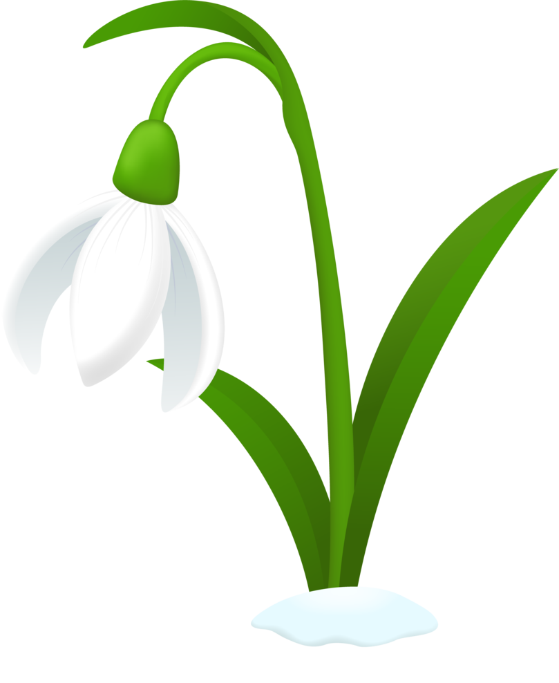 Snowdrop flower free . Daffodil clipart animated