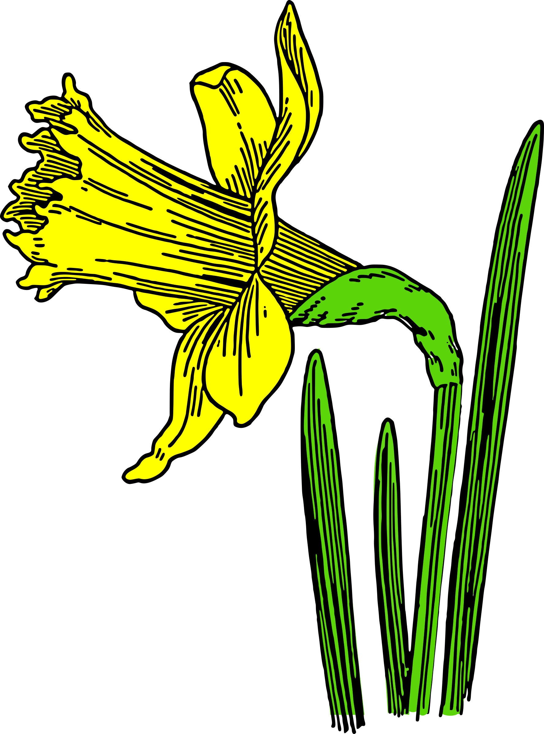 Daffodil clipart animated. Colored icons png free