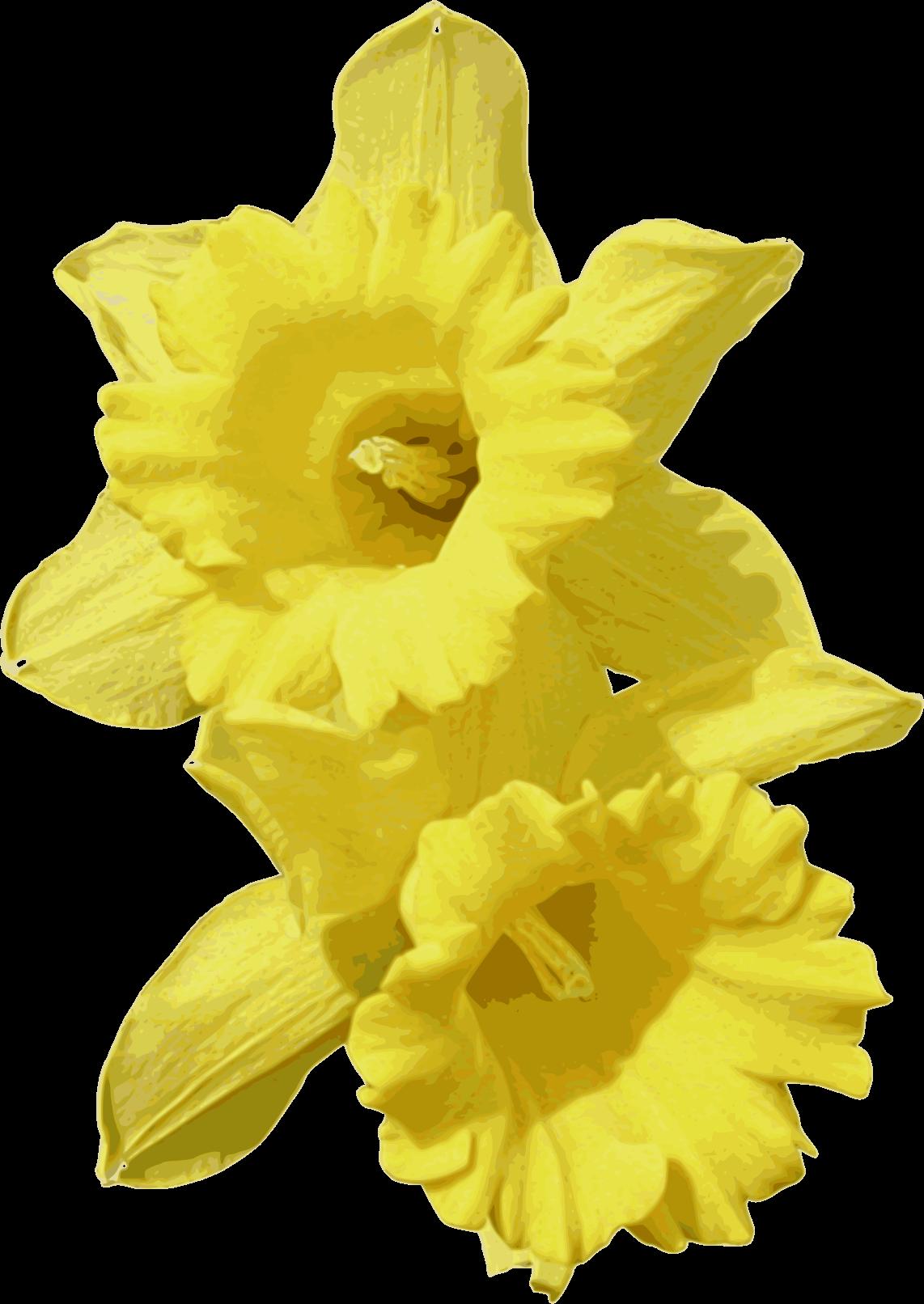 Daffodil clipart big flower, Daffodil big flower ...