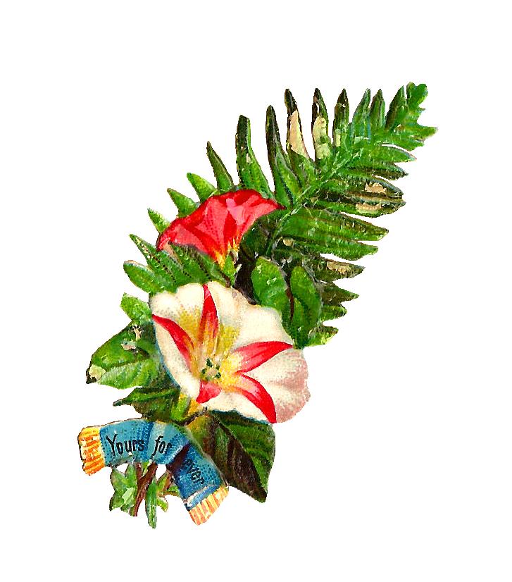 Fern clipart lauae. Botanical clip art cliparts