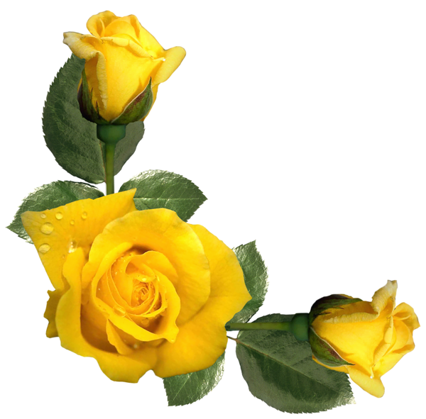Beautiful roses decor png. Rose clipart yellow rose