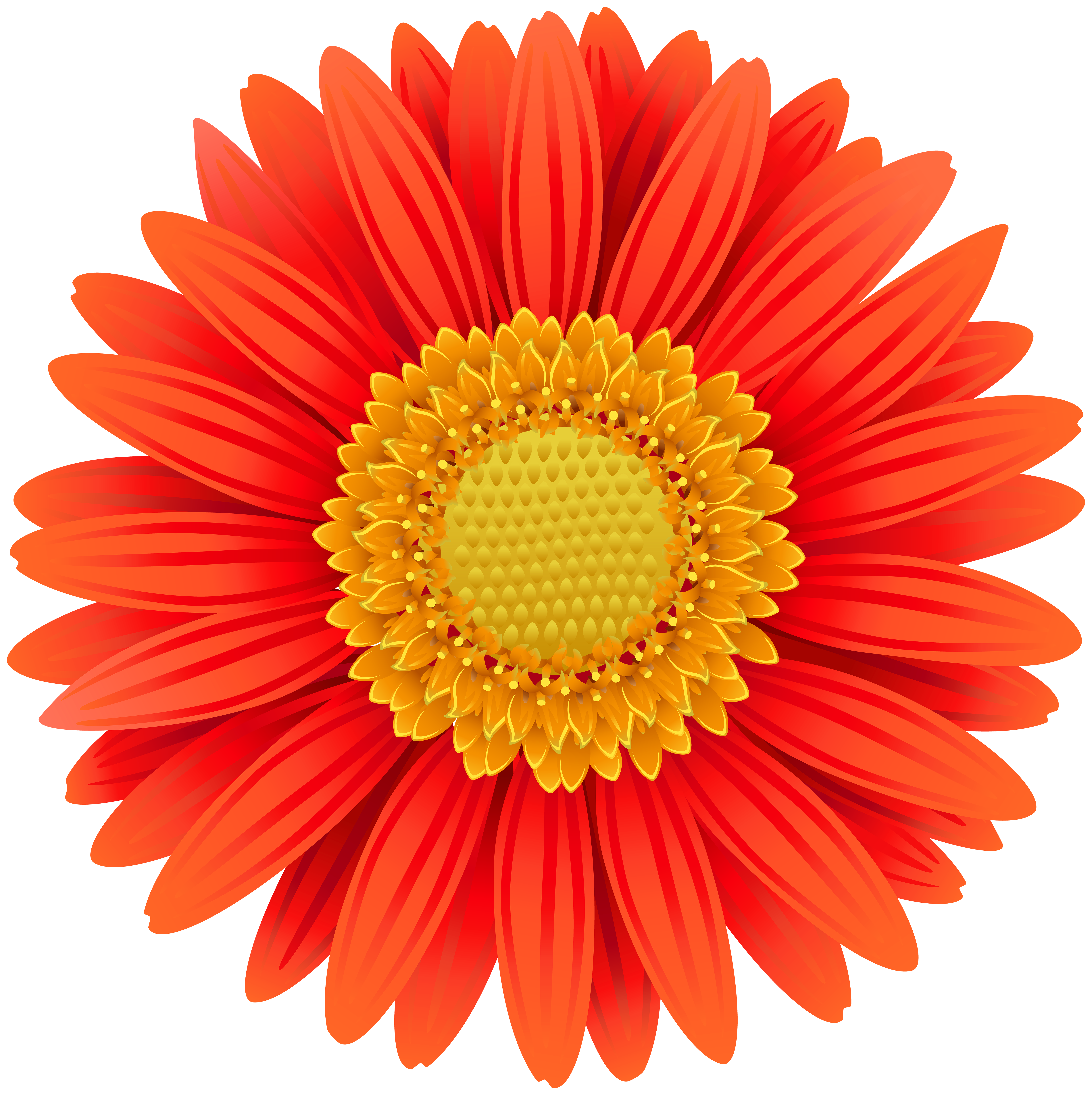 Poppy clipart daisy. Orange gerbera transparent clip