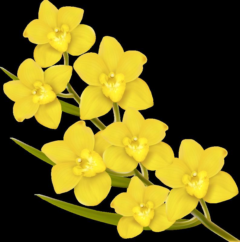 png pinterest flower. Lily clipart blue jasmine