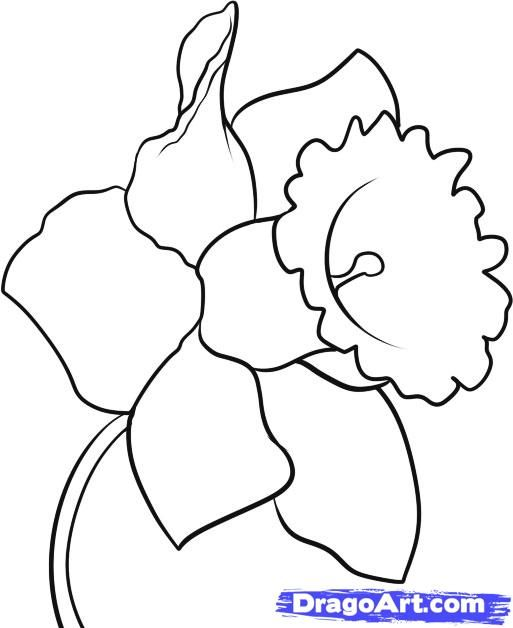 How to a step. Daffodil clipart easy draw