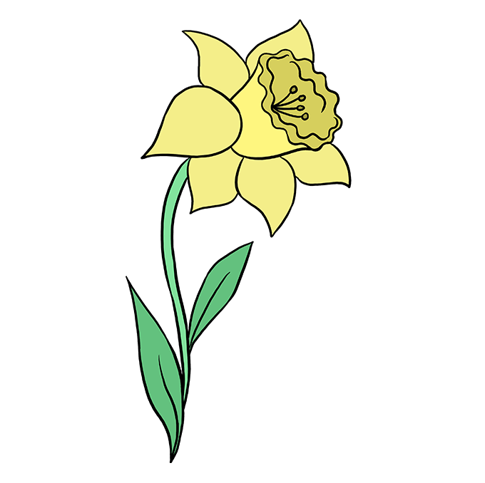 How to a drawings. Daffodil clipart easy draw