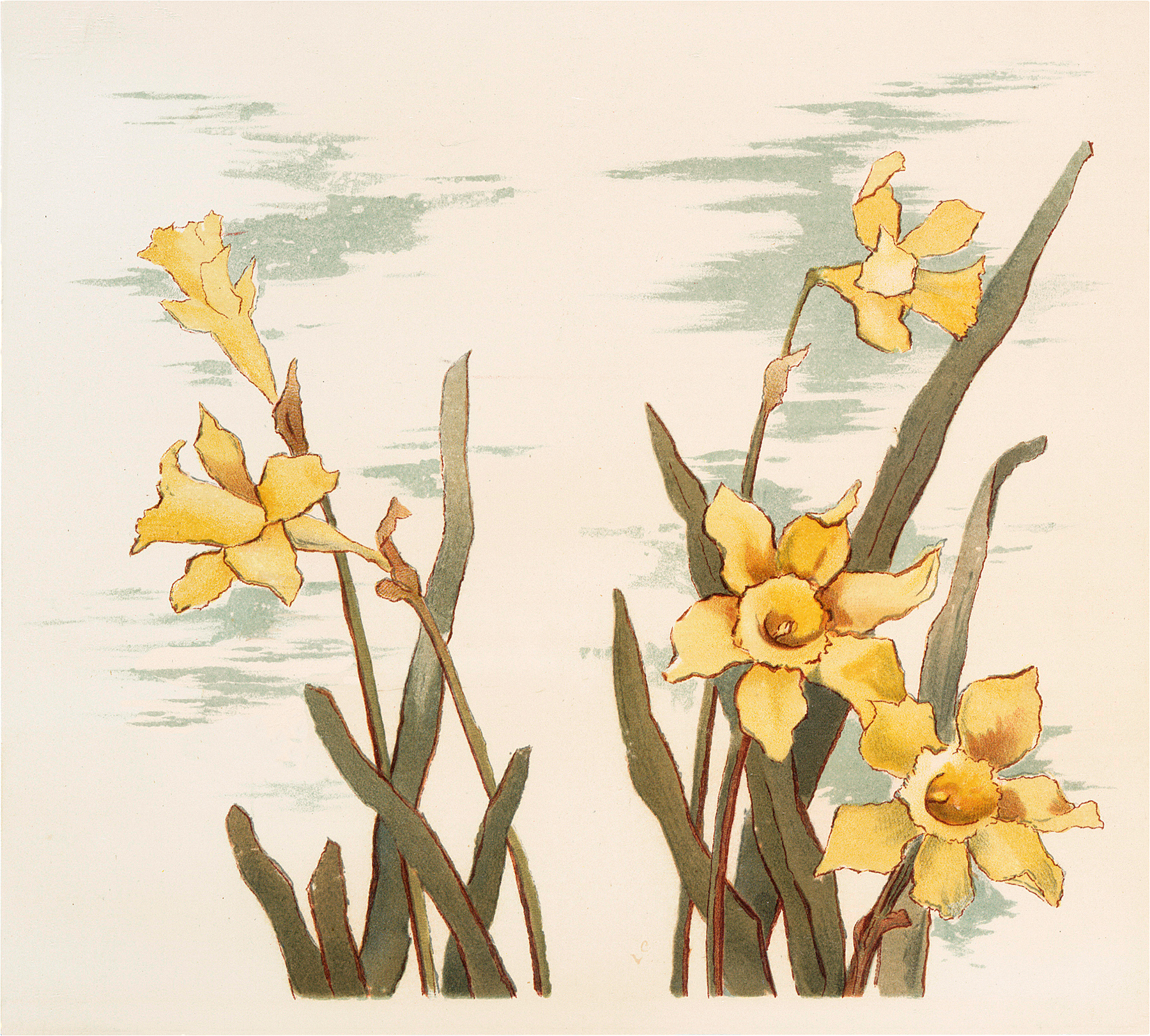 images yellow beauties. Daffodil clipart field daffodil