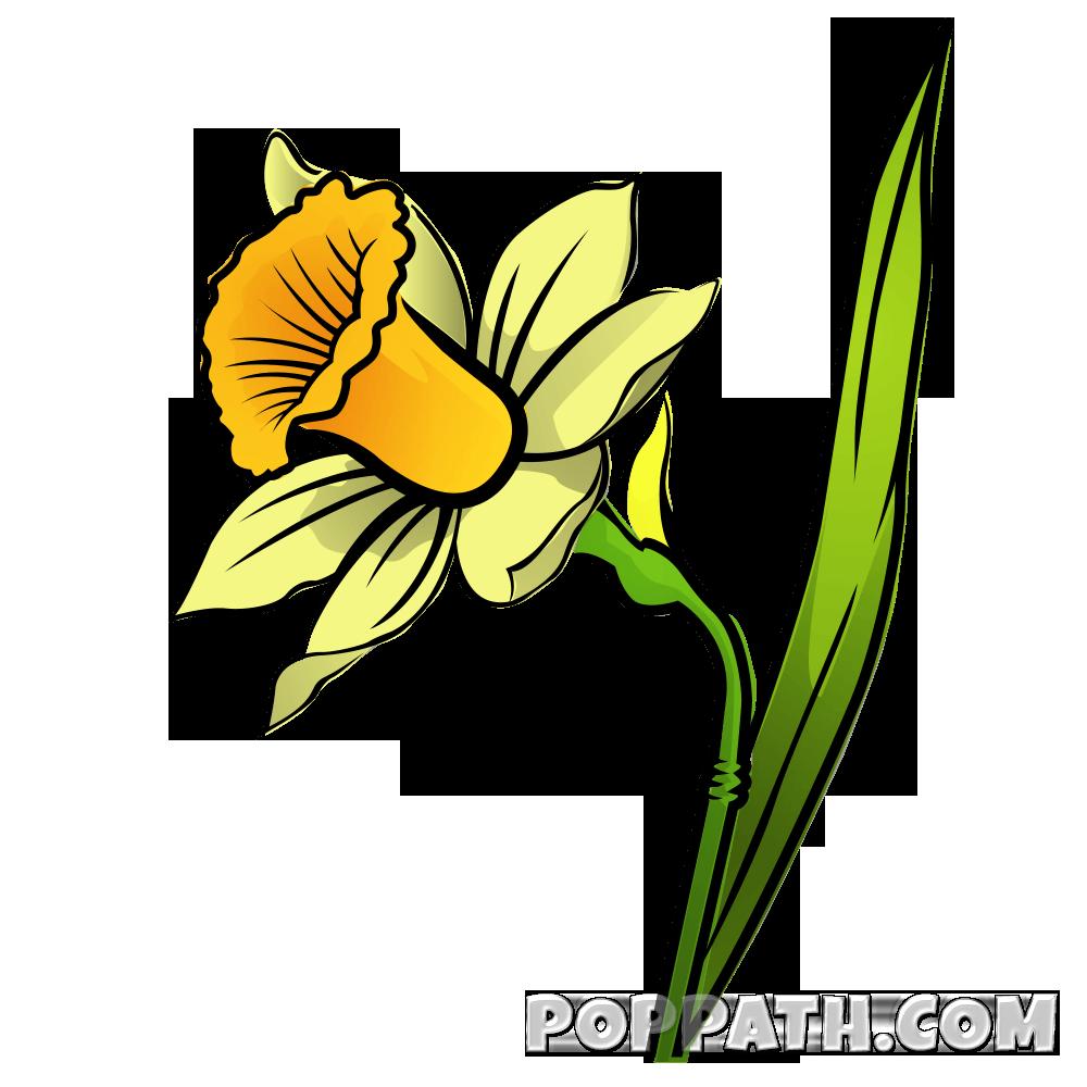 How to draw a. Daffodil clipart field daffodil