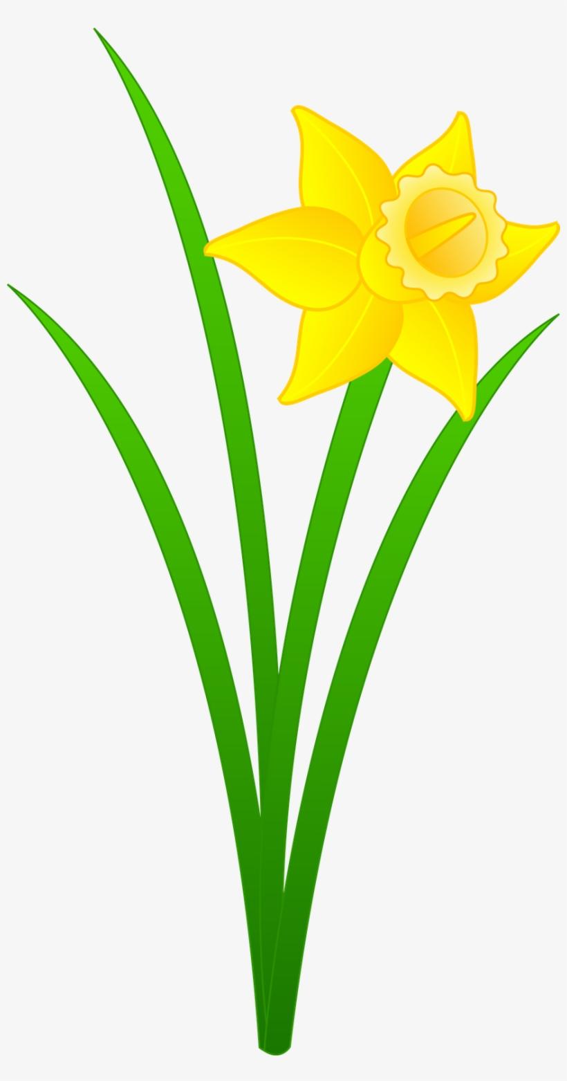 . Daffodil clipart flower blossom