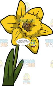 Daffodil clipart flower blossom. A gorgeous of