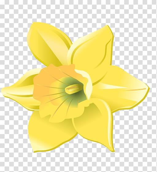 Cut flowers petal others. Daffodil clipart head
