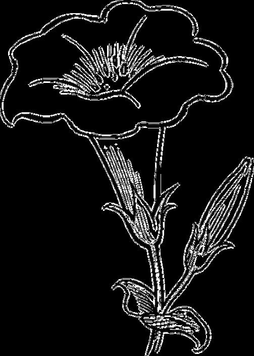 Daffodil Clipart Hosta Daffodil Hosta Transparent Free For
