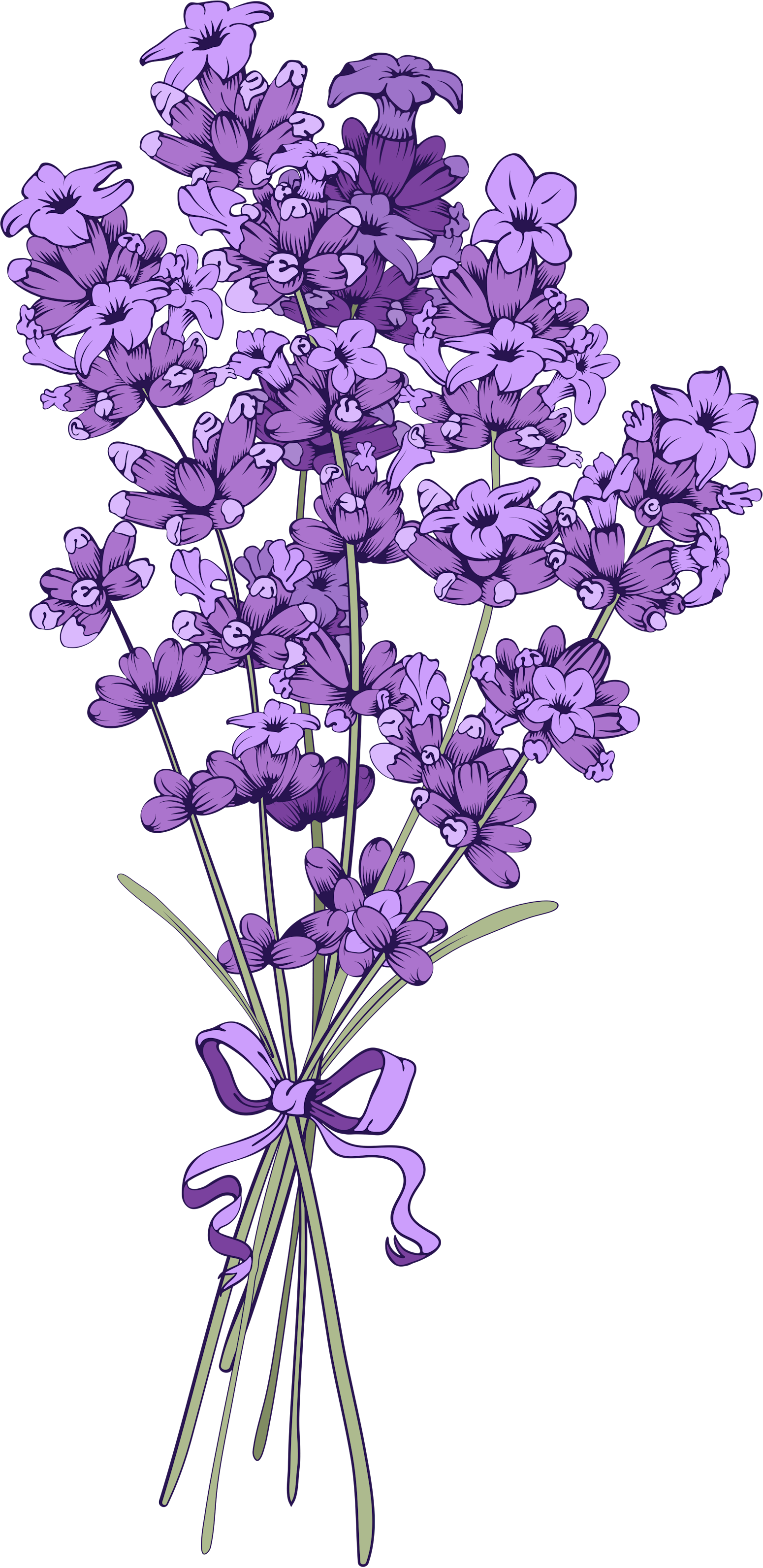 Lavender clipart lavender field. Pin by on pinterest