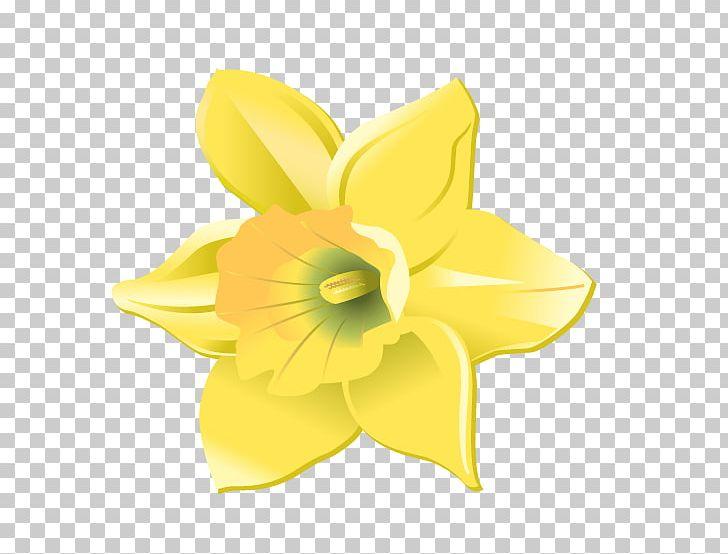 Cut flowers png amaryllis. Daffodil clipart petal