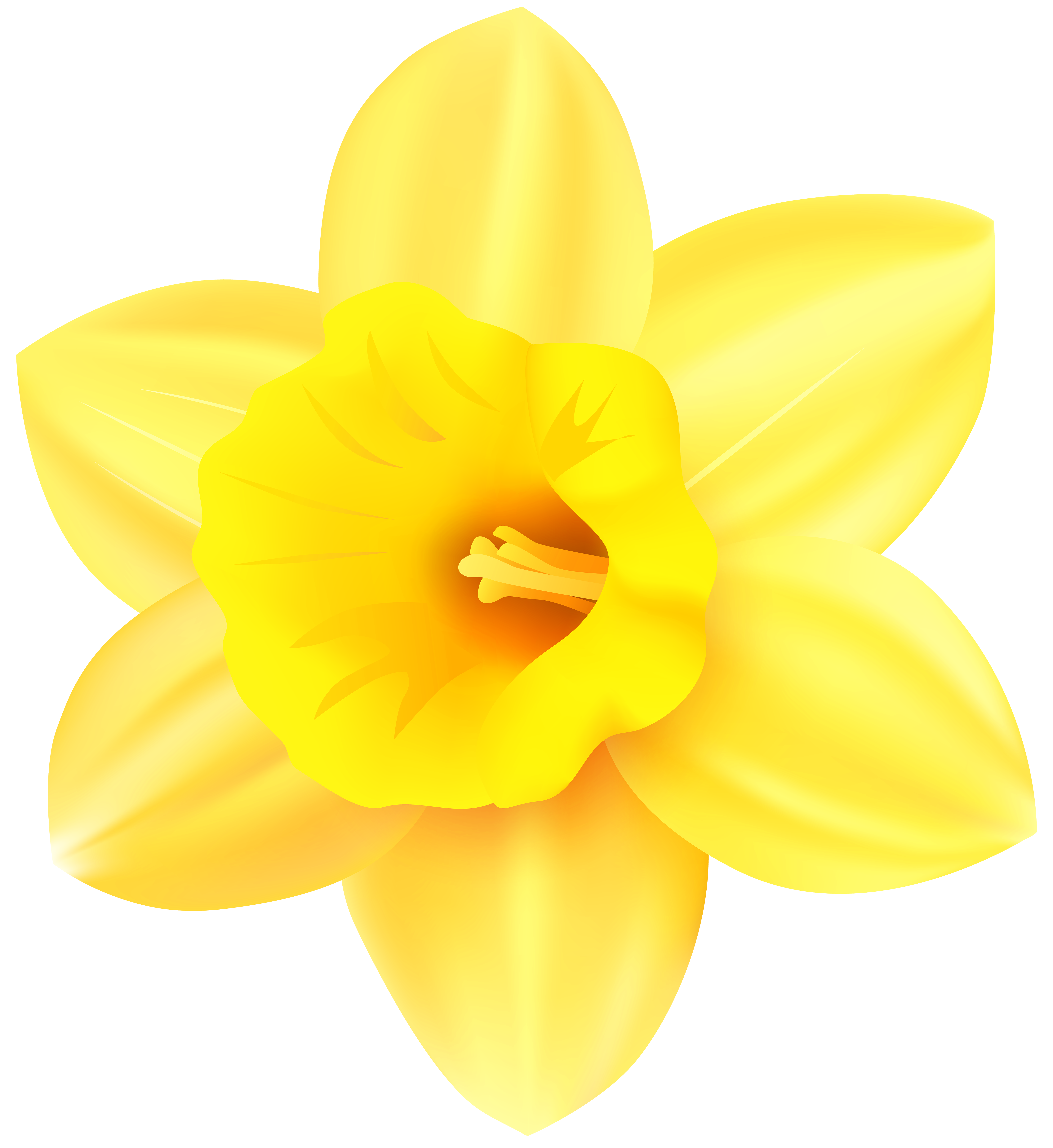 Narcissus yellow png transparent. Daffodil clipart petal