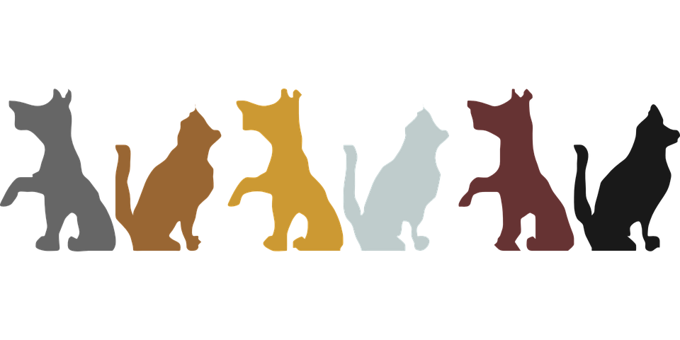 Pet clipart household pet. Dog boarder graphics illustrations
