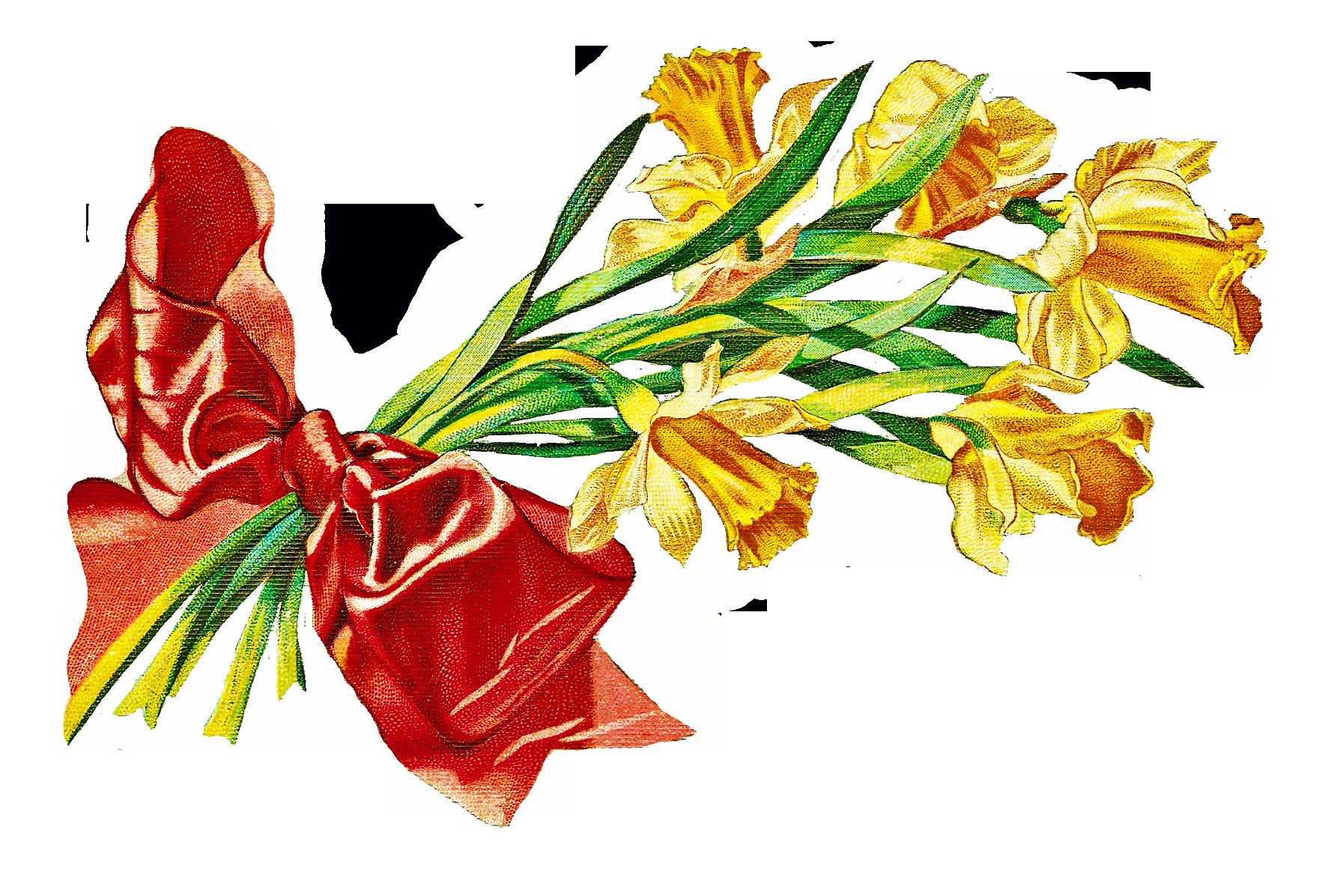 Daffodils cliparts co catnipstudiocollage. Postcard clipart clip art