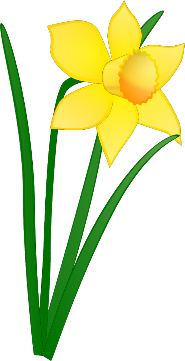 daffodil clipart relay for life