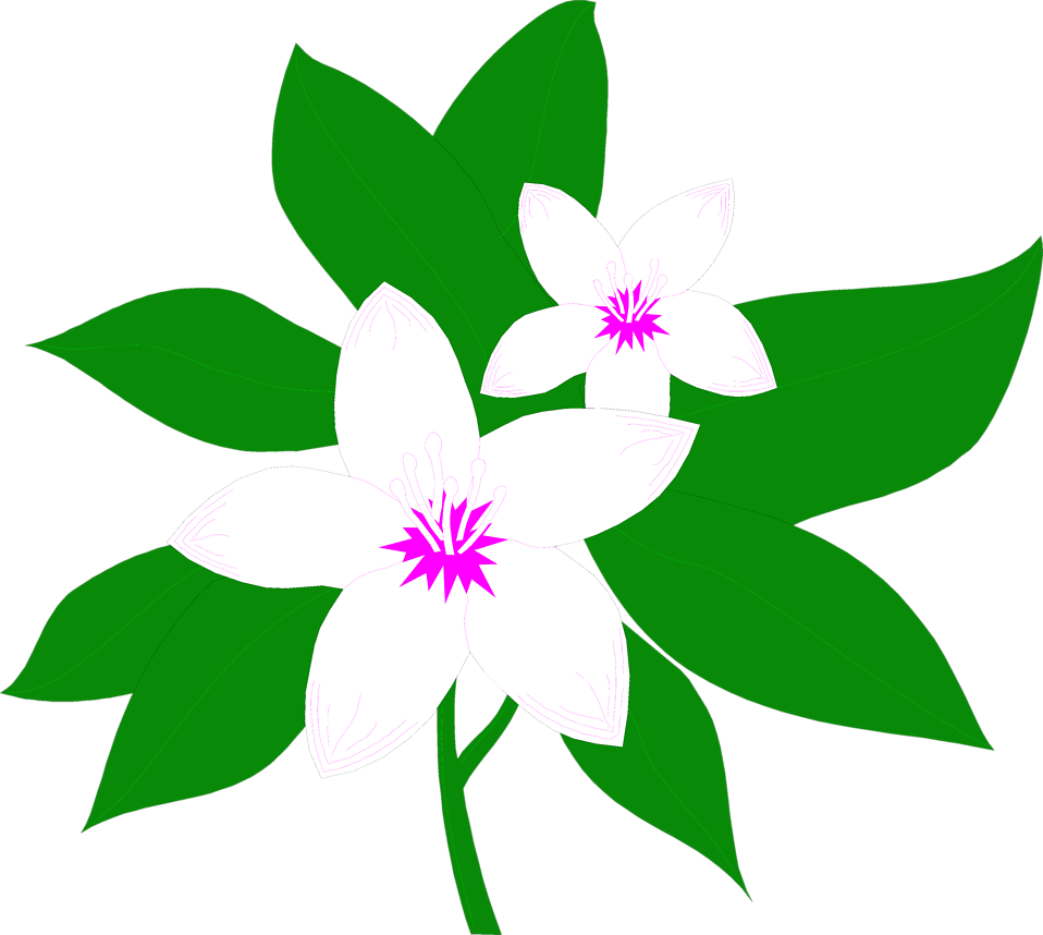 Magnolia magnolia blossom