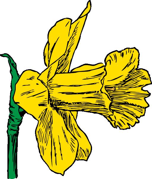 Daffodil svg