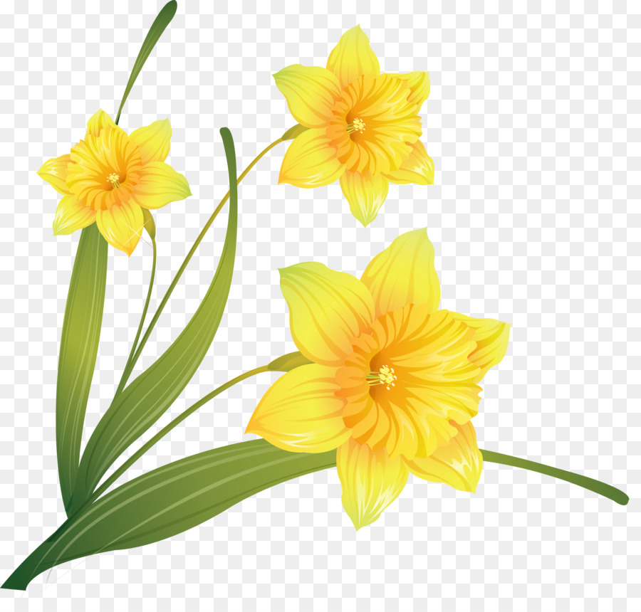 Daffodil clipart transparent background. Flowers flower