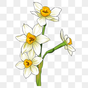 Png images vector and. Daffodil clipart trumpet flower