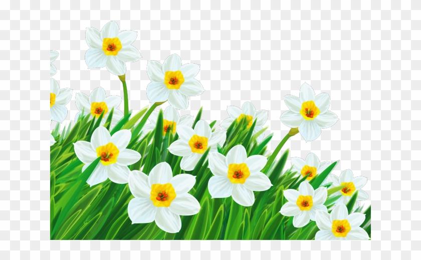 Daffodil clipart trumpet flower. Easter clip art transparent