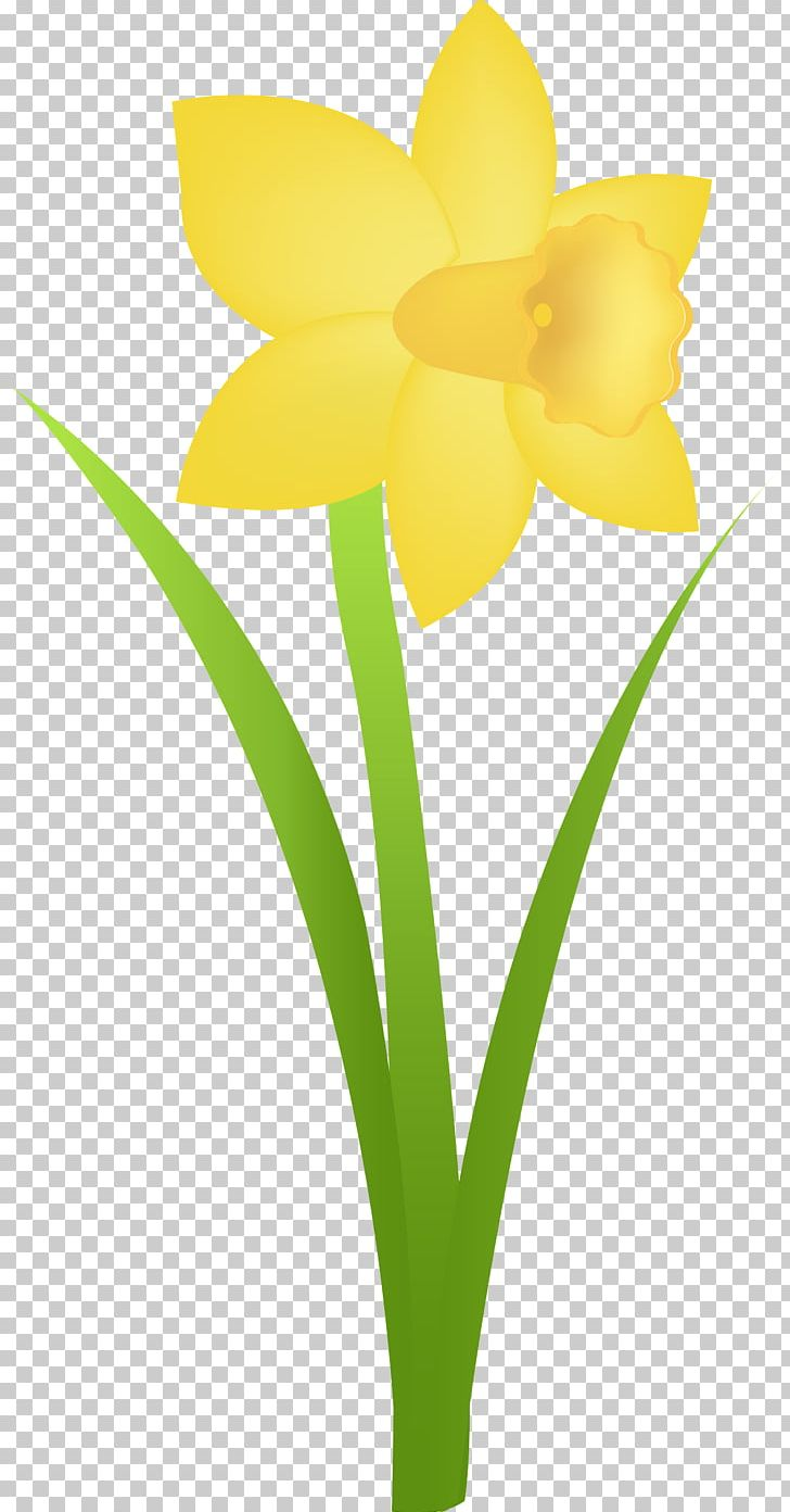 Flowerpot png amaryllis family. Daffodil clipart tulip
