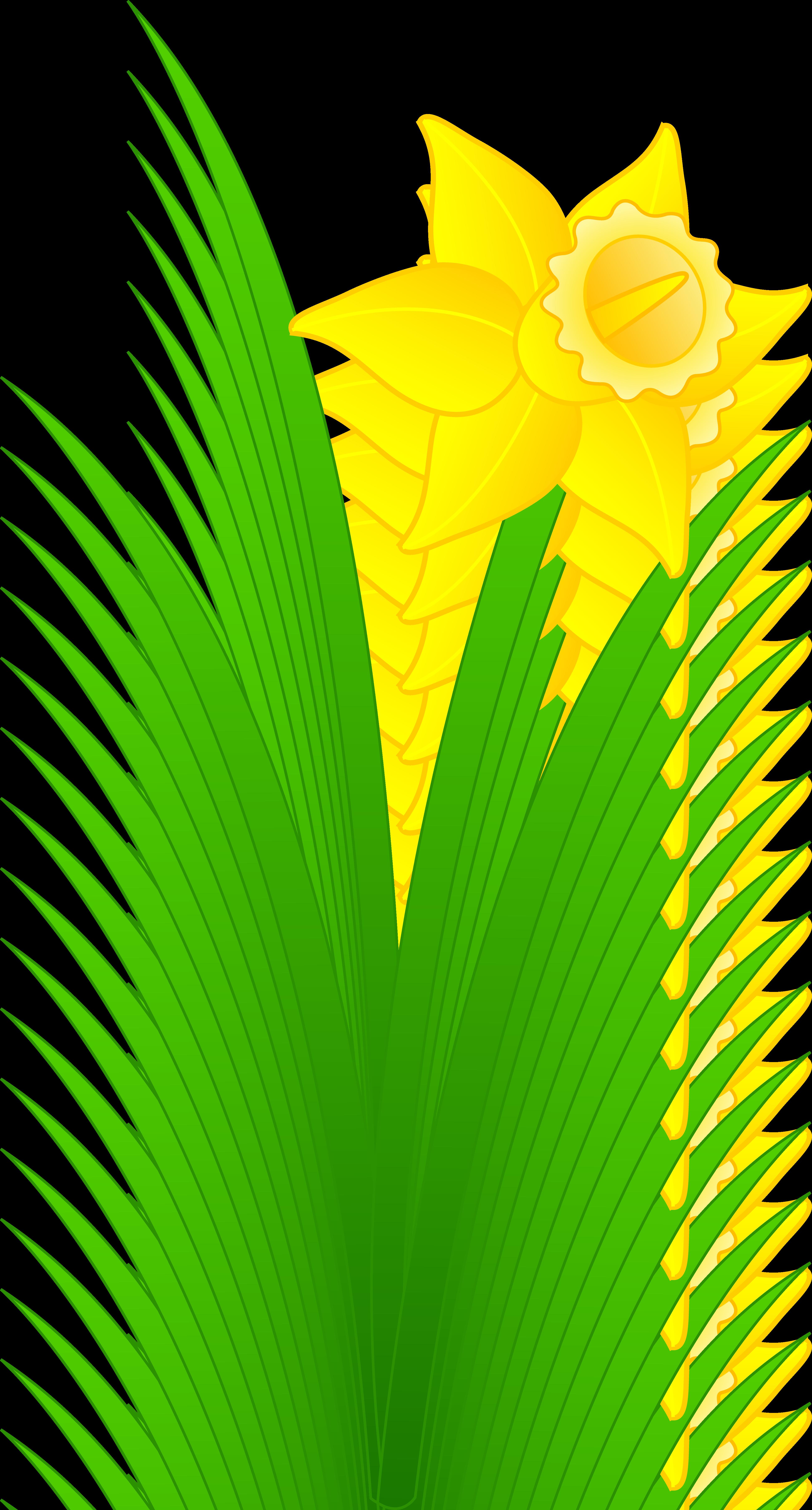 Daffodil clipart. Flower clip art panda