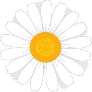 White flowers clip art. Daisy clipart