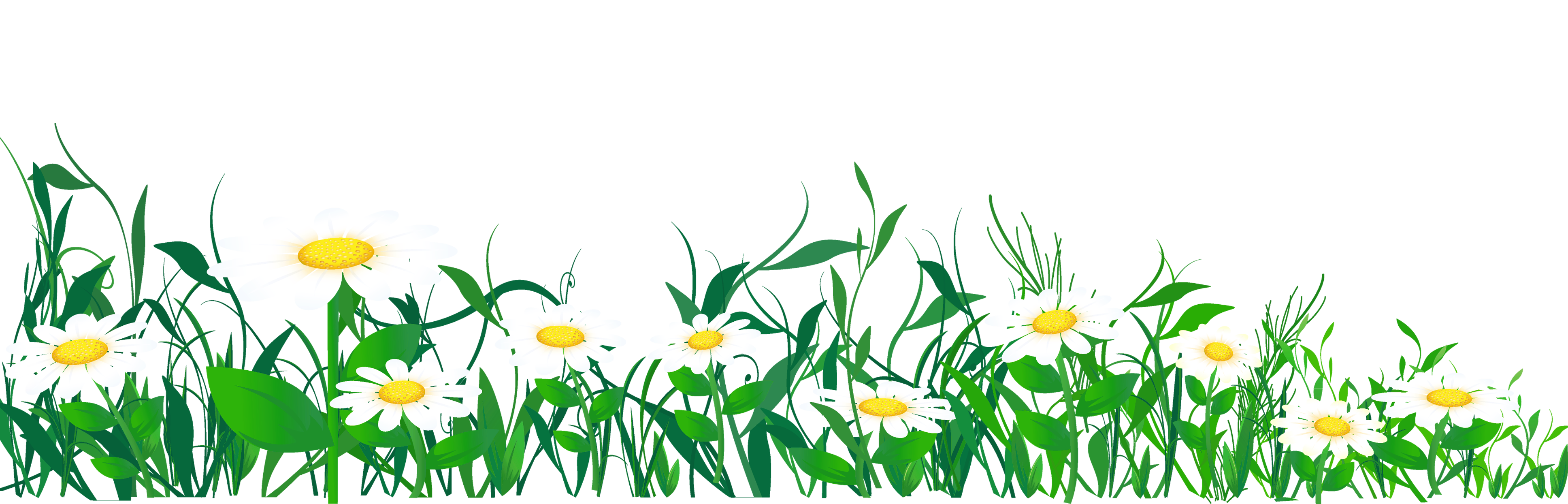 Daisies clipart. And grass png picture