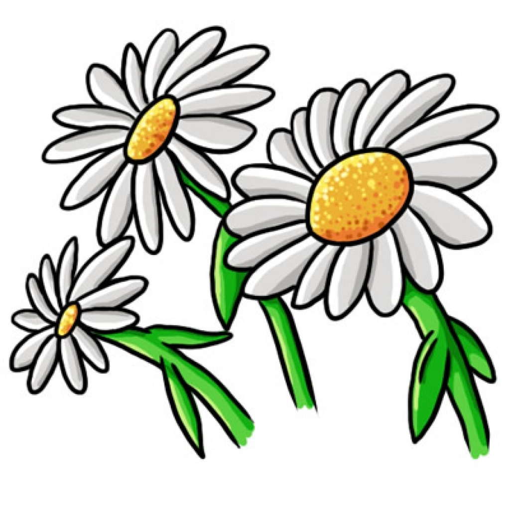 Free daisy flower cliparts. Daisies clipart