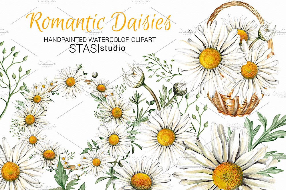Watercolor illustrations creative market. Daisies clipart
