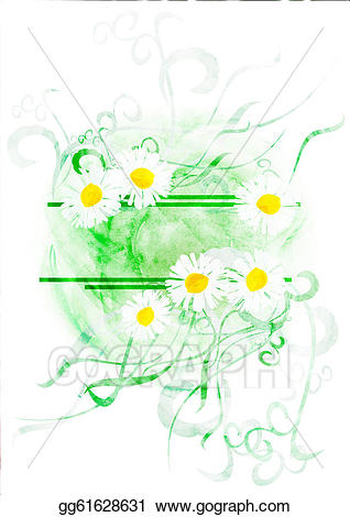 Drawing watercolor with chamomiles. Daisies clipart banner