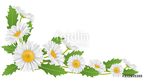 Daisies clipart banner. Free daisy download clip