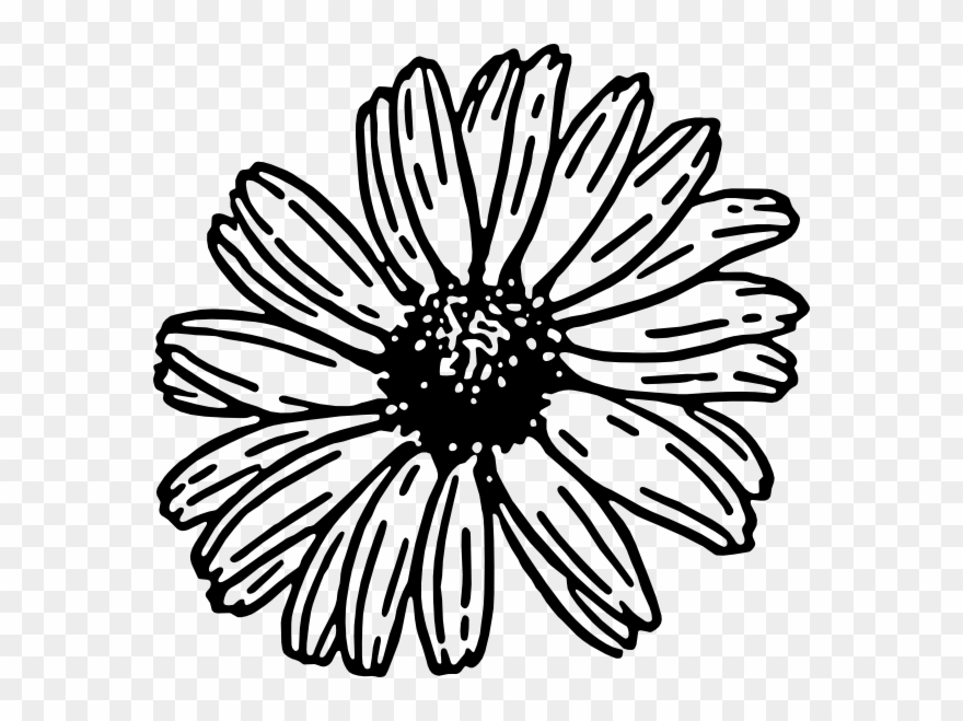 Daisy png download . Daisies clipart black and white