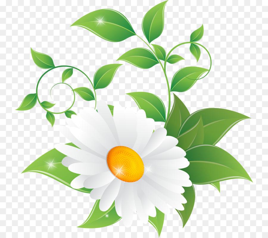 Common daisy clip art. Daisies clipart chamomile flower