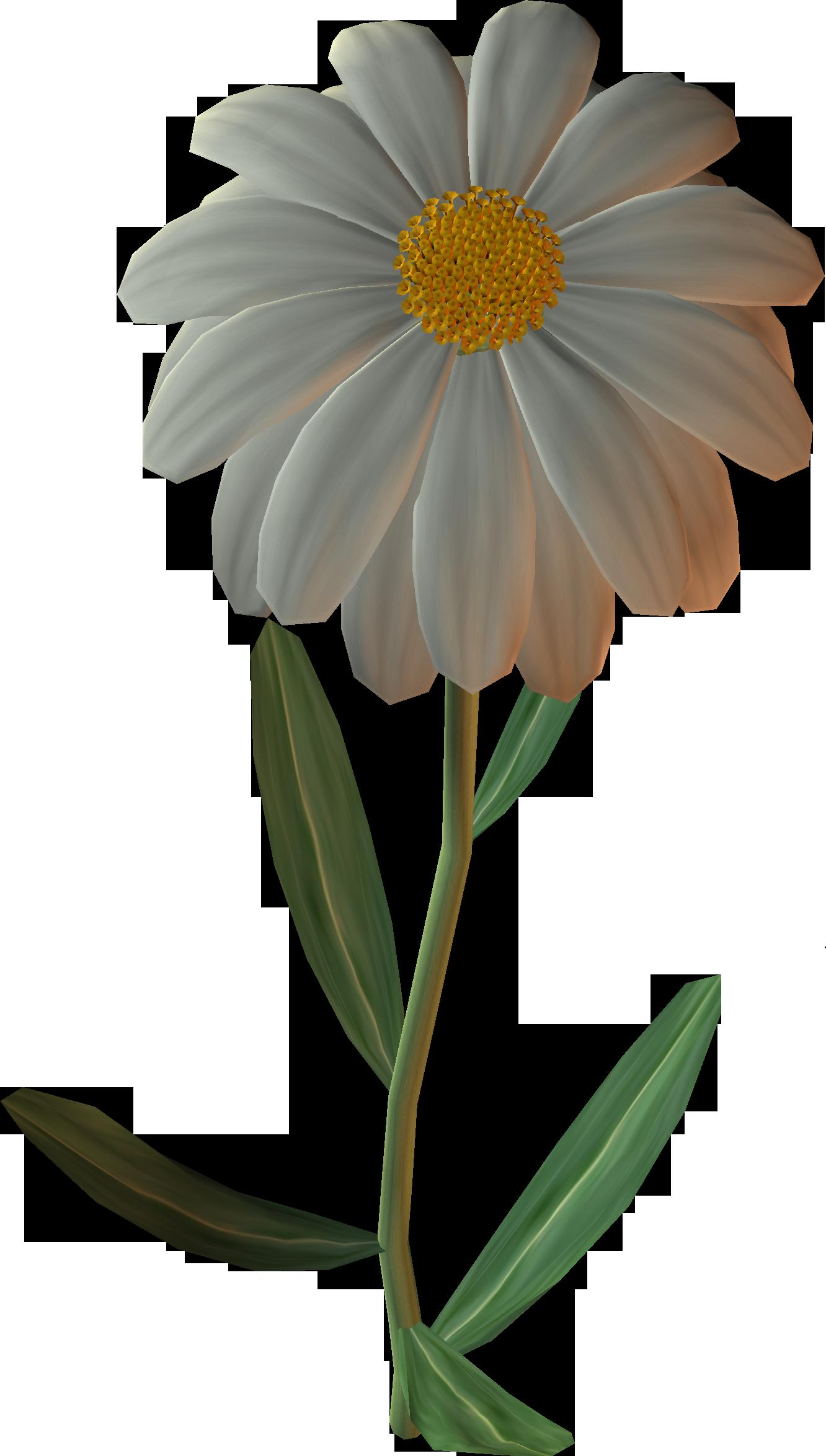 German common daisy clip. Daisies clipart chamomile flower